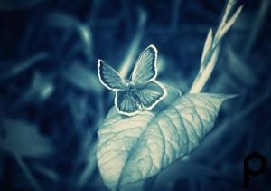 Грабли превратились в бабочку
