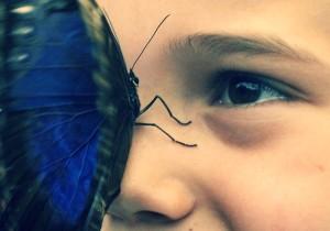 Картинка визуализирована до мелочей - бабочка